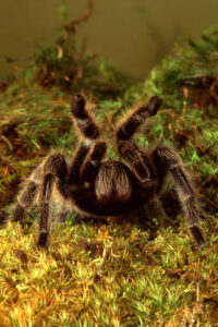 How to tell if my tarantula is stressed?