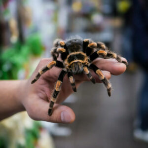 do tarantulas need something to do?