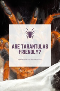 Are tarantulas friendly?