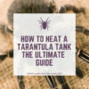 How to heat a tarantula tank?