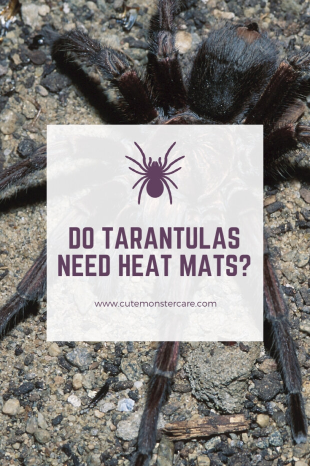 Do tarantulas need heat mats?