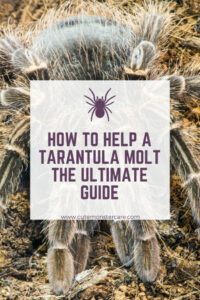 How to help your tarantula molt