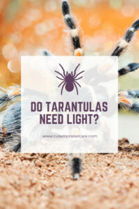 Do Tarantulas need light?
