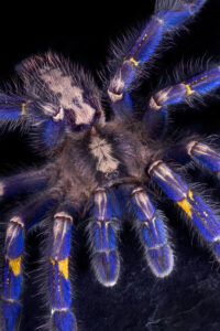 best substrate for tarantulas?