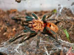 signs that your tarantula is too cold