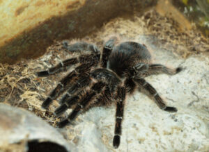 what substrate is safe for tarantulas?