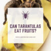 Can tarantulas eat fruits?