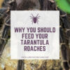 Can tarantulas eat roaches?