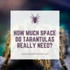 Do tarantulas need a lot of space?