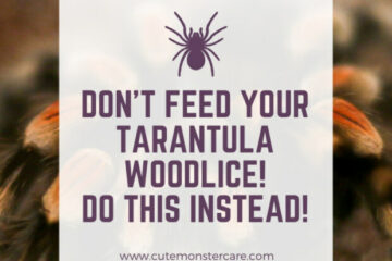 Can Tarantulas Eat Woodlice?