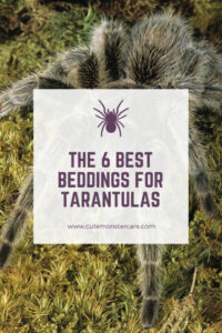 Best bedding for tarantulas