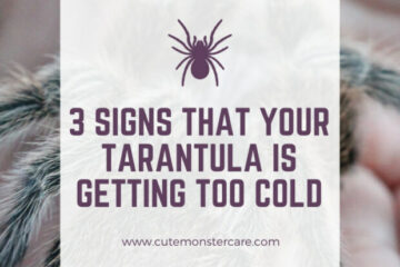 Is my tarantula getting too cold?