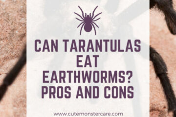 Can tarantulas eat earthworms?