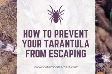 How to prevent my tarantula from escaping?