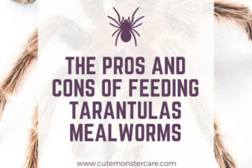 can tarantulas eat mealworms?