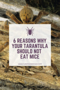 Can tarantulas eat mice?