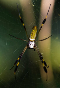 Are spiders and tarantulas the same?