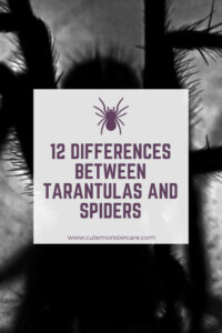 What is the difference between spiders and tarantulas?