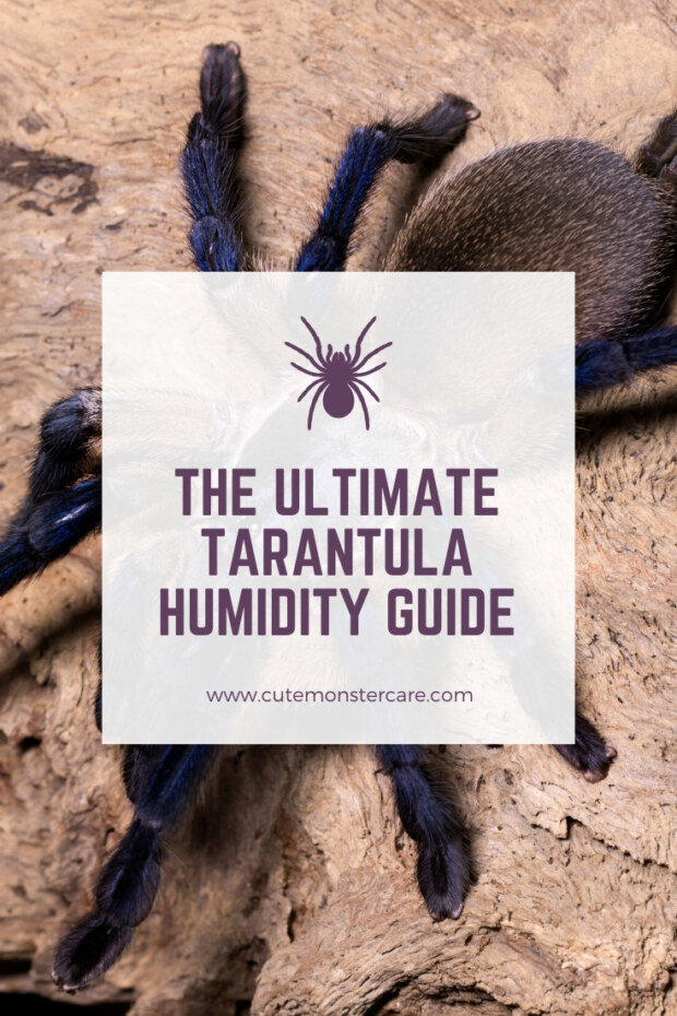 Tarantula Humidity Guide
