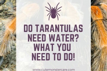 Do Tarantulas Need Water?
